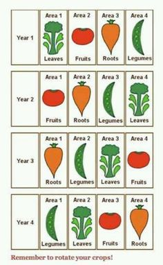 crop rotation guide for home gardens | Crop rotation