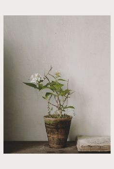 Small potted white flower in weathered pot. Not everything in pots should be dramatic and colorful.