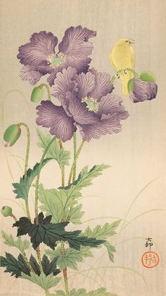 Keshi ni kinshijaku by Ohara Koson Plant Illustration, Botanical Illustration, Ohara Koson, Oriental Flowers, Geisha Art, Japanese Flowers, Korean Art, Zen Art, Japanese Painting
