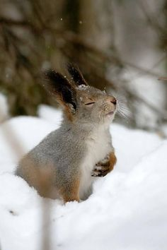 Funny pictures about Overly Dramatic Squirrel. Oh, and cool pics about Overly Dramatic Squirrel. Also, Overly Dramatic Squirrel. Animals And Pets, Baby Animals, Funny Animals, Cute Animals, Wild Animals, Nature Animals, Small Animals, Beautiful Creatures, Animals Beautiful
