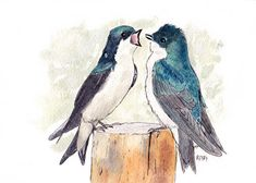 Male Tree Swallows 5x7  Pen and Ink and Watercolor
