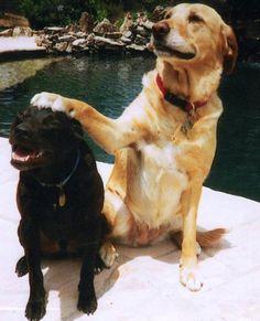 Good boy! good boy!