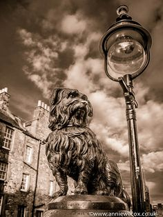 https://flic.kr/p/gRFMcY | Greyfriars Bobby | Greyfriars Bobby was a Skye Terrier who became known in 19th-century Edinburgh for supposedly spending 14 years guarding the grave of his owner until he died himself on 14 January 1872. Click here to find out more about the history of Bobby en.wikipedia.org/wiki/Greyfriars_Bobby