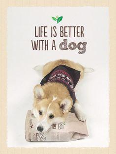 Dogs just naturally make our lives better. Photo via @lacorgi
