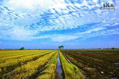 Photograph Paddy-fields by Šhadman Kay on 500px