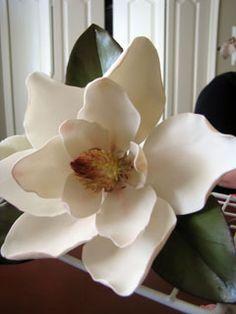 magnolia                                                                                                                                                                                 More
