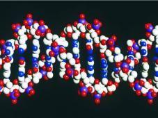 #Internacionales Investigadores descubren un método mejor para modificar ADN. http://noticiasdechiapas.com.mx/nota.php?id=89261 …