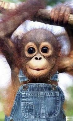cute animals pictures | Cute Animals Wallpapers Description