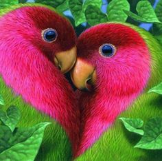cute birds love | From @GuessQuest collection