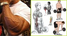 The 4 Best Exercises You Must DO For Huge Forearm , how to get a bigger forearms in just six weeks using our super 4 exercises Gym Workout Chart, Gym Workouts, Big Forearms, Forearm Workout, Super 4, Biceps, Exercises, Bodybuilding, Cook