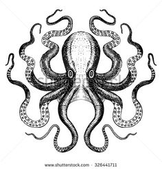 Octopus Stock Photos, Royalty-Free Images & Vectors - Shutterstock