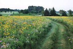 """Képtalálat a következőre: """"wild flower field"""""""