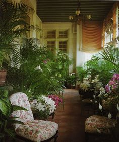British Colonial Edwardian Sunroom Garden room. Jacques Grange .   Repitition of green, white and fuschia with terracotta tones.  Overhead and wall lighting. Orchids. Chair fabric is icing on the cake.