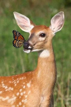~ A butterfly and a young fawn.  Site en Français. ~