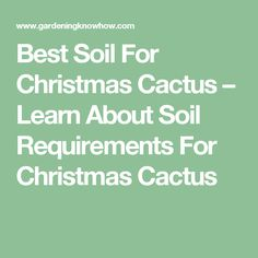 Best Soil For Christmas Cactus – Learn About Soil Requirements For ...