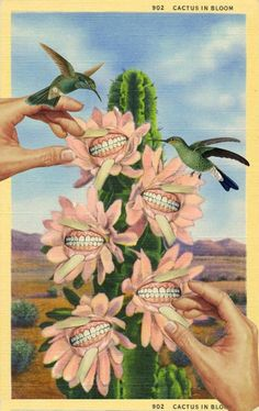 Julia Lillard-Cactus In Bloom