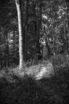 bwstock.photography  //  #nature #forest #path Black White Photos, Black And White, Forest Path, Free Black, Paths, Nature, Photography, Black White, Fotografia