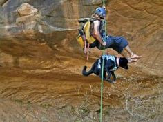 Harnesses for Rock Climbing Dogs: Darrin Reay, reality TV star on Naked and Afraid, takes Karma everywhere, including on the 130-foot rappel off Morning Glory Bridge near Moab. Karma is wearing a Ruffwear dog harness.