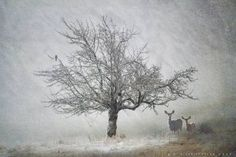 """""""lone tree kestral and deer"""" by R Christopher Vest.  Discover more at www.imagekind.com!"""