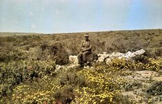 """Generalmajor Alfred Gause (Chef des Generalstabes Panzergruppe """"Afrika"""") posed in the flowery grass of North Africa and sporting his Ritterkreuz des Eisernen Kreuzes which he received in 13 December 1941. Photo taken by his commander, General der Panzertruppe Erwin Rommel (Kommandierender General Panzergruppe """"Afrika"""") during his Campaign in North Africa, winter 1941/1942. Gause was initially sent to Africa with a large staff by Oberkommando des Heeres (OKH), the German Army High Command, to…"""