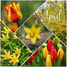 Neuer Monat, November, Calendar, Spring Summer, Easter, Seasons, Flowers, Collages, Friday