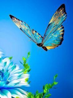 Delicada borboleta | Delicate butterfly