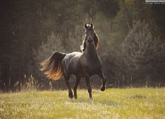 APPROACHING Equine photography by Ekaterina Druz