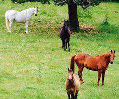Horses of Waiheke Island, New Zealand 28/11/15 Photography by Alida