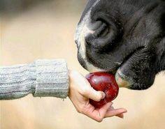 Educar en la realidad: EDUCACION VIRTUAL ¿Cuantos niños han visto un caballo en una tableta, pero no saben a que huele, como se siente al tacto, que ruido hace y que alto es? Para leer más: http://www.conectartecon.com/2015/04/educar-en-la-realidad.html