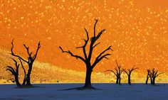 This is not a painting, dead trees park, Namibia. Photo by: Frank Krahmer (very cool!)