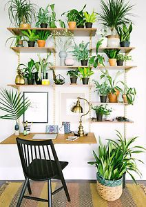 To say that plants are having a moment might be the understatement of the year — or maybe the last four or five years, to be exact. Everywhere one looks (well, definitely on Pinterest and Instagram) plants...