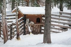 Chien de traineau Glamping, Canada, Husky, Landscapes, Spaces, World, House Styles, Diy, Travel