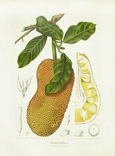 Berthe Hoola van Nooten Tropical Prints 1863