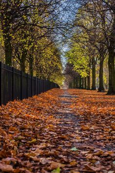I recently read an article that Phil Griffin wrote for Manchester Confidential, which celebrates Levenshulme for being itself. He concluded that the… Manchester Uk, Time Of The Year, Life Is Good, I Am Awesome, Love, Summary, Places, Travel, Autumn