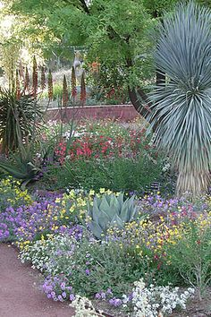 """~~simply must have a gardener, when i win the lottery!~~ Boyce Thompson Arboretum S. One of the most colorful collections is our Demonstration Garden … and what we're demonstrating is """"xeriscape"""". Low Water Landscaping, Succulent Landscaping, Garden Landscaping, Arizona Landscaping, Garden Paths, Arizona Gardening, Desert Gardening, Cactus, Drought Tolerant Landscape"""