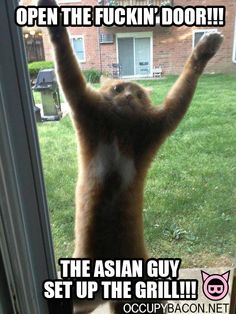 Asian Grilled Cat