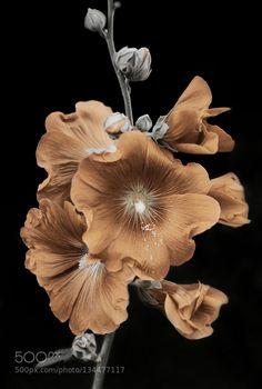 Delfinium - Pinned by Mak Khalaf Fine Art ArtFlowerbeautifulcolorflowerflowersgardenlightmacronaturespringsummersunDelfinium by elena_ntv