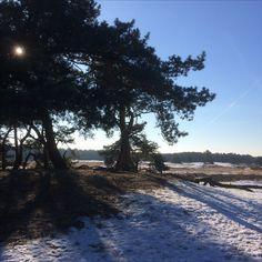 21 januari 2017 - Wandelen op een heerlijke winterse middag rond de Roestelberg op de Loonse en Drunense Duinen.
