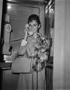 Audrey Hepburn, Yorkshire terrier Mr. Famous.