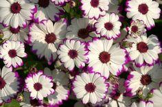 Google Image Result for http://mdb1.ibibo.com/0015ddb2aa3616c7465645f5f0c54d0fbf0a31672db7b8954437cee82ac3ae8e293aa7bf99d8e41efe2a799cfc52887120f2b06e3.jpeg/flower-nature-colour-color-petals.jpeg
