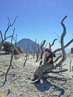 Dead forest Papandayan, Garut West Java ID