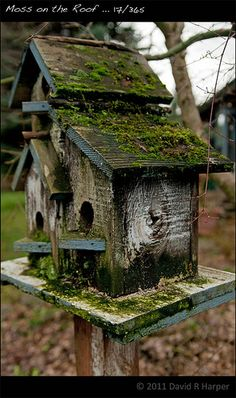 I want to make a bunch of rustic bird houses and cover my garden fence with them! Bird Cages, Bird Feeders, Fairy Houses, Dream Garden, Yard Art, Garden Projects, Wood Projects, Beautiful Birds, Garden Inspiration