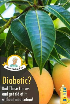 #DidYouKnow Diabetic? Boil These Leaves and Say Goodbye to them without medication! When ignored or left untreated, Diabetes can lead to a series of other serious illnesses such as blindness, nerve damage, kidney failure, heart disease, erectile dysfunction (in men). With processed food and fast food readily available, the number of diabetic people increase by the day. So, what can we do to cure diabetes if we don't have money for medication?
