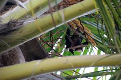 Wildlife photo collection by Polina Sharma