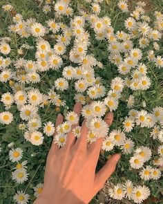 Spring Aesthetic, Nature Aesthetic, Flower Aesthetic, Aesthetic Vintage, Belle Aesthetic, Simple Aesthetic, Images Esthétiques, Vintage Cartoons, Photographie Portrait Inspiration