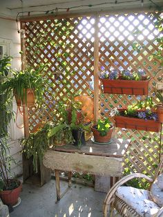 Garden trellis used in this way gives some protection from the elements whether is shelter from the sun or the wind or the cold!