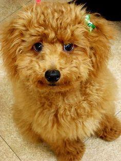 Awww, such a cute puppy