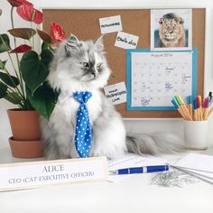 Alice has been made CEO (Cat Executive Officer) of MotionGrade!