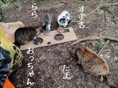 里親さんブログ風邪引き組にりんごちゃんも、煎茶ちゃんは下がお気に入り - http://iyaiya.jp/cat/archives/72556
