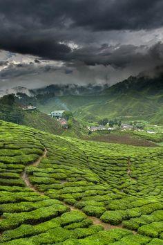 Green Tea Factory - Fujian Province, China